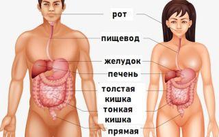 Особенности пищеварения мужчин и женщин