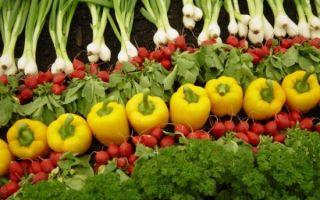 Влияние продуктов питания на здоровье человека