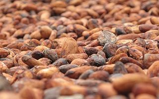 Анализ и рецепты какао-порошка для целей похудения