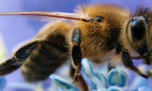 Продукты пчеловодства – лечение и оздоровление