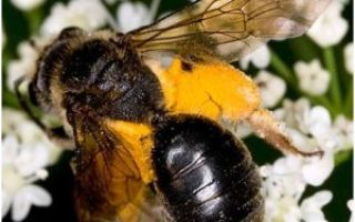 Появление пчел и климат