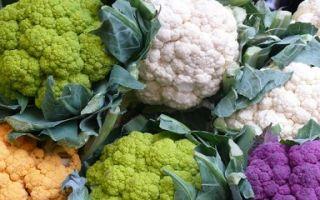 Польза и полезные свойства цветной капусты
