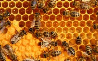 Пчел продукты