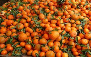 Можно ли потолстеть от большого количества мандаринов