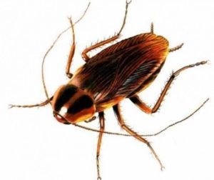 вредный таракан