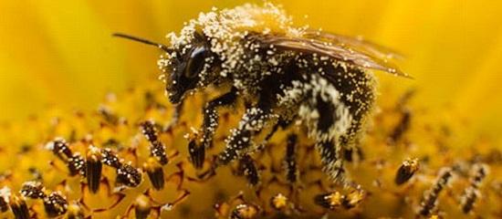 насекомые опылители