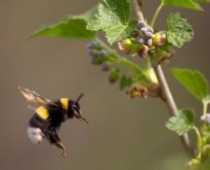 достоинства мёда