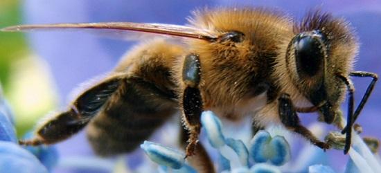 продукты пчеловодства и их использование