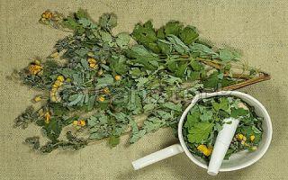 Применение настойки чистотела в лечебных целях