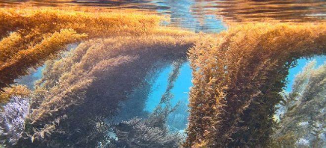 Химический состав определяет полезные свойства водорослей