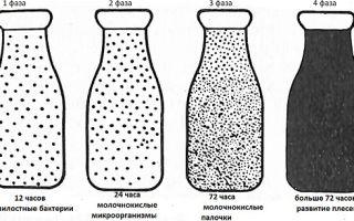 Фазы развития разных микроорганизмов и бактерий в молоке