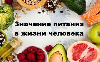Значение питания в жизни человека как залог здоровья