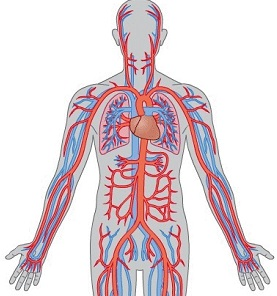 болезни кровообращения