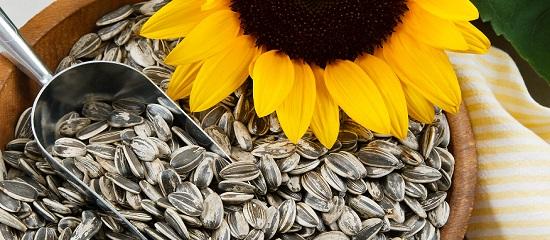 сколько можно есть семечек в день