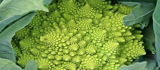 зеленая цветная капуста