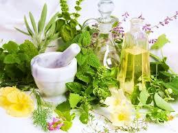 Какие лекарственные растения есть