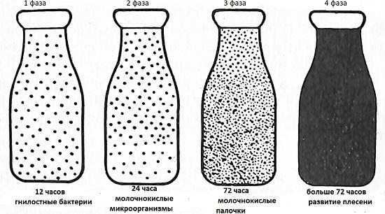 бактерии в молоке