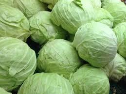 польза белокочанной капусты