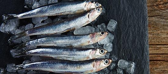 способы замораживания рыбы