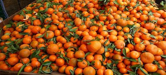 можно ли потолстеть от мандаринов