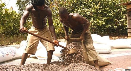 какао в мешках